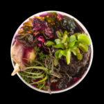 """Vanitas in a Petri Dish""_Suzanne Anker_New York (17/09 – 23/10/2016)"