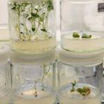 """""""From the Laboratory to the Studio: Interdisciplinary Practices in Bio Art"""" @ SVA Bio Art Laboratory, New York City"""